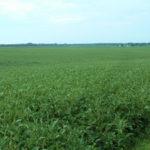 central-illinois-Duke-farm-for-sale-soybean-fields