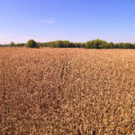 central-indiana-farmland-auction-cornfield-selling-farmland