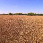 central-indiana-farmland-auction-cornfield-selling-farmland