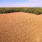 cornfield-selling-indiana-farm-shelby-county-farm-auction