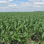 farm-land-estate-sale-north-central-illinois-cornfield-farm-property