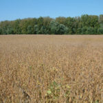 indiana-farmland-for-sale-shelby-county-farm-auction-sale