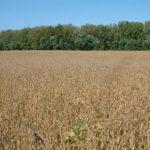 indiana-farmland-for-sale-shelby-county-farm-auction-sale