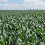 north-central-illinois-farm-land-estate-sale_auction-farm-land-sale