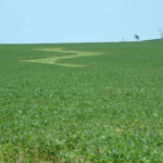 northern-illinois-133-acres-farmland-for-sale