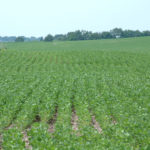northern-illinois-farm-land-investment-opportunity