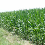 west-central-illinois-farm-for-sale-shank-farm_tillable-acres