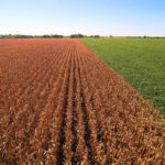 west-central-illinois-farmland-auction-corn-soybeans