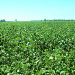 west-central-illinois-farmland-auction-tillable-acres