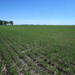 piatt-county-illinois-farm-land-auction_loranda-group