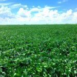 Piatt County 77 Acre Farm Land Auctrion Pic 2