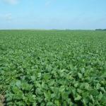Christian County IL 90 Acre Farmland Listing Photo
