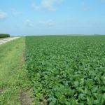 Christian County IL 90 Acre Farmland Listing Photo 2