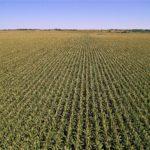 Rice Aerial Quad 1