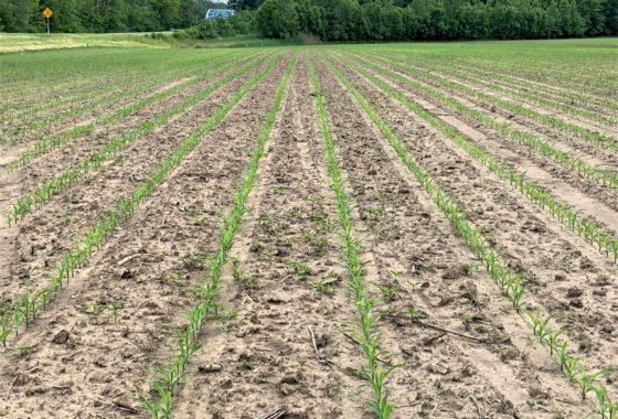 Farm Land For Sale Indiana, Indiana Farmland For Sale | The