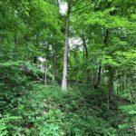 Carroll County IN 136 Acre Farm Listing 2