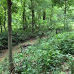 Carroll County IN 136 Acre Farm Listing 3