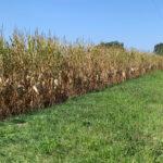Polk 233 Corn Pic